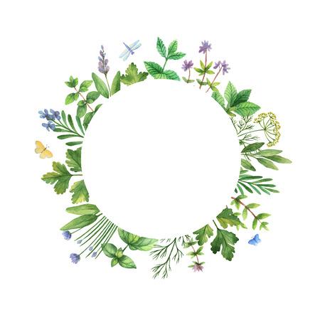 perejil: Marco de la acuarela mano con hierbas y especias pintado. El diseño perfecto para tarjetas de felicitación, empaque, de la cocina, cosméticos, productos naturales y orgánicos. Marco de la Ronda con espacio para el texto. Foto de archivo