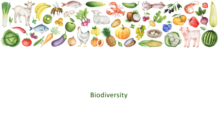 Watercolor banner of the biodiversity of healthy eating. Collection of fruits, vegetables, animals, fish and birds. Space for your text. Banco de Imagens - 58970831