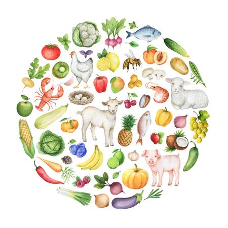 건강 식품의 수채화 생물 다양성 개념 설명. 원 안에 과일, 야채, 동물, 물고기와 조류의 컬렉션입니다. 상점, 잡지, 웹 사이트에 대한 우수 아이템입니