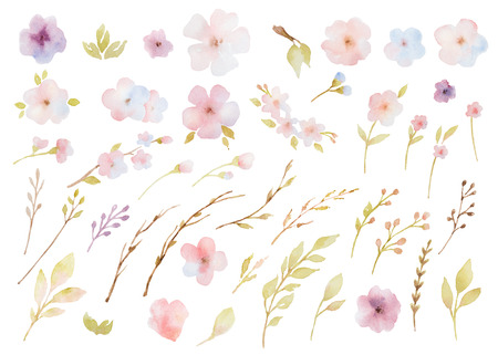 Watercolor set of flowers, leaves and branches. Elements for design on white background.