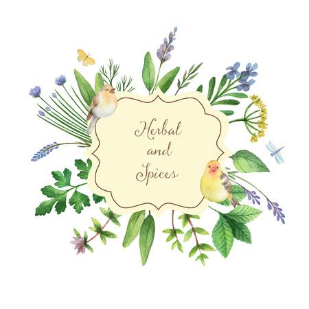 Akwarela ręcznie malowane transparent z ziół i przypraw. Idealny projekt na kartki okolicznościowe, skrabbuking, menu, opakowania, wystrój kuchni, kosmetyki, produkty naturalne i ekologiczne. Baner z miejscem na tekst.