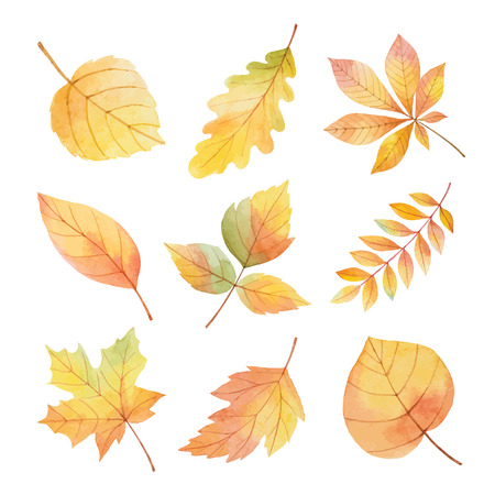Watercolor vector set autumn leaves on a white background for your design. Vector illustration. Imagens - 130047475