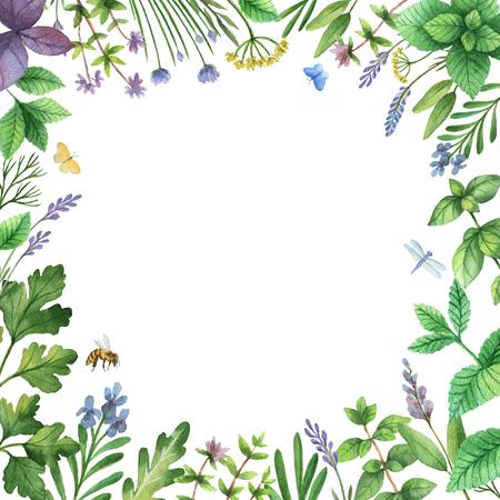 수채화 손으로 야생 허브와 향신료 배너를 그렸다. 인사말 카드, 포장, 주방 인테리어, 화장품, 천연 및 유기농 제품에 대한 완벽한 디자인. 텍스트에