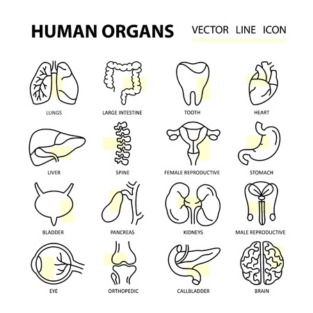 physiology: Set modern thin line web icons on medicine human internal organs. Premium quality vector designs.