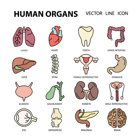 urologist: Modern color thin line icons on a theme medicine human internal organs.  Label for medical organization. Flat style icons for your collection.