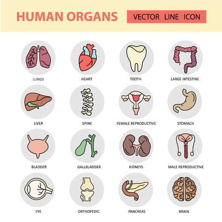 urologist: Modern color thin line icons on a theme medicine human internal organs. High quality vector logos. Label for medical organization. Flat style icons for your collection.