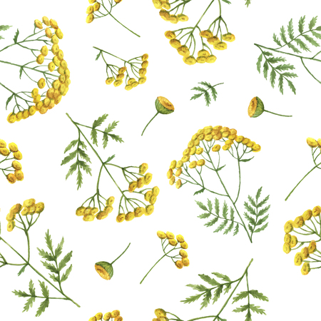 Watercolor seamless pattern with tansy flowers and branches. Vector background for textile, paper and other print and web projects.