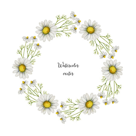 Watercolor vector round frame of chamomile. Healing Herbs for design Natural Cosmetics, aromatherapy, medicine, health products and homeopathy. Illustration