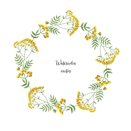 Watercolor vector round frame of tansy. Healing Herbs for design Natural Cosmetics, aromatherapy, medicine, health products and homeopathy.
