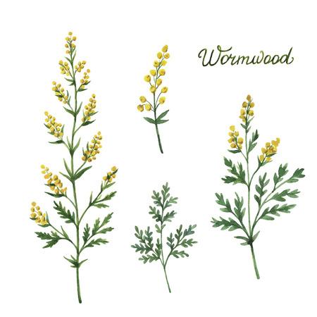 Dibujado a mano de acuarela vector de ilustración botánica de ajenjo. Hierbas medicinales para el diseño de cosmética natural, aromaterapia, medicina, productos de salud y la homeopatía.