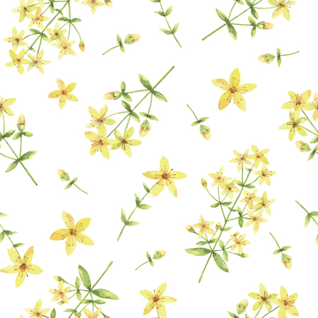 Watercolor vector seamless pattern with St Johns wort flowers and branches. Background for textile, paper and other print and web projects.