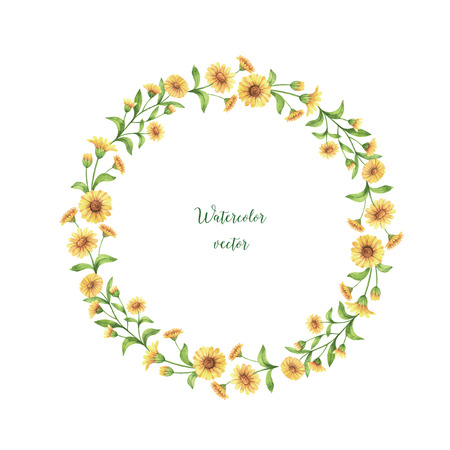 calendula: Watercolor vector round frame of calendula, marigold. Healing Herbs for design Natural Cosmetics, aromatherapy, medicine, health products and homeopathy.