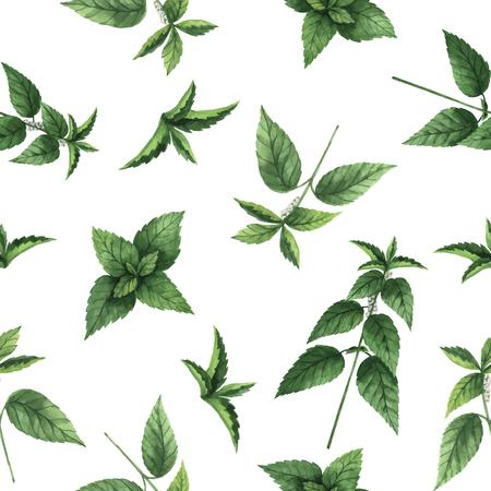 Modèle sans couture aquarelle vecteur avec des fleurs d'ortie et des branches. Fond pour textile, papier et autres projets imprimés et web. Banque d'images - 71472758