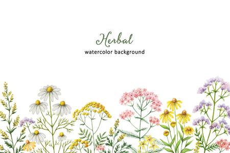 의료 식물 수채화 배너입니다. 카드, 결혼식 초대장, 포스터 허브 치유, 날짜 또는 인사말 디자인을 저장합니다. 텍스트에 대 한 공간을 가진 여름 꽃.