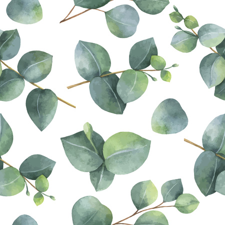 eucalyptus: Watercolor vector seamless pattern with silver dollar eucalyptus leaves and branches.
