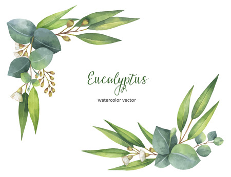 Watercolor vector wreath with green eucalyptus leaves and branches. Banque d'images