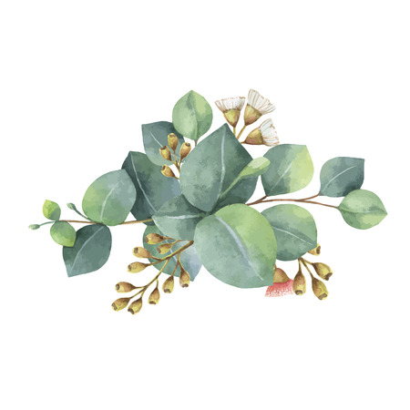 botany: Watercolor vector bouquet with green eucalyptus leaves and branches.