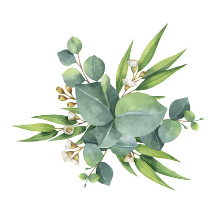 Watercolor vector bouquet with green eucalyptus leaves and branches.