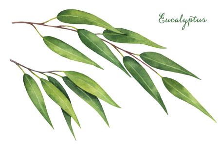 Aquarel hand beschilderde set met eucalyptus bladeren en takken.
