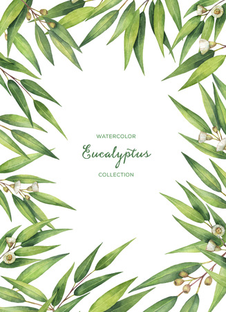 grass flower: Watercolor green floral card with eucalyptus leaves and branches isolated on white background. Stock Photo