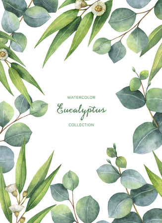 Watercolor green floral card with eucalyptus leaves and branches isolated on white background. 스톡 콘텐츠