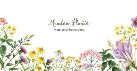 薬用植物と水彩のバナー。