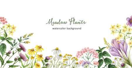 calendula: Watercolor banner with medical plants.