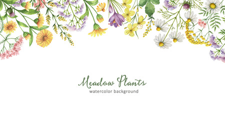 yarrow: Watercolor banner with meadow plants.