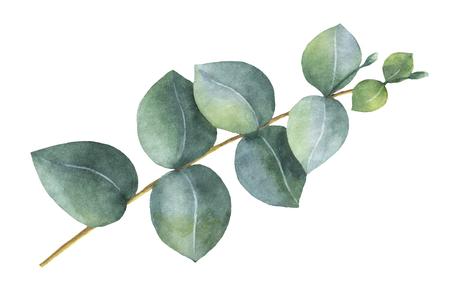 수채화 손으로 실버 달러 유칼립투스 잎과 나뭇 가지를 색칠합니다. 스톡 콘텐츠