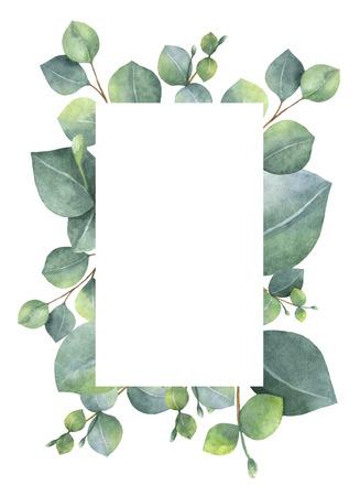 medicina natural: Acuarela tarjeta floral verde con hojas y ramas aisladas sobre fondo blanco dólar de plata de eucalipto. Foto de archivo