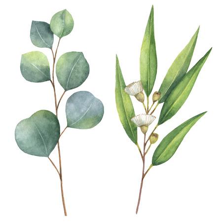 tige: main Aquarelle Peintes avec des feuilles d'eucalyptus et des branches.
