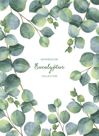 실버 달러 유칼립투스 잎과 흰색 배경에 고립 분기 수채화 녹색 꽃 카드입니다.