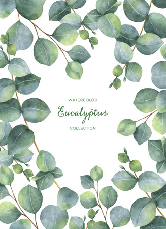 Waterverf het groene bloemen kaart met zilveren dollar eucalyptus bladeren en takken op een witte achtergrond. Stockfoto - 73246596