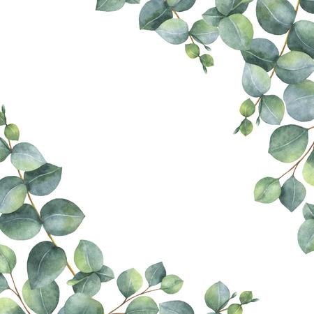 dolar: Acuarela tarjeta floral verde con hojas y ramas aisladas sobre fondo blanco dólar de plata de eucalipto. Foto de archivo