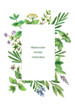 水彩の手描きの野生のハーブやスパイスと花のカード。 写真素材