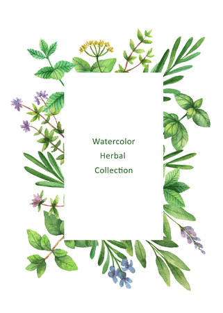 Watercolor hand painted floral card with wild herbs and spices. Reklamní fotografie