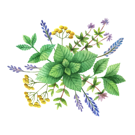 wild mint: Watercolor hand painted bouquet with wild herbs and spices.
