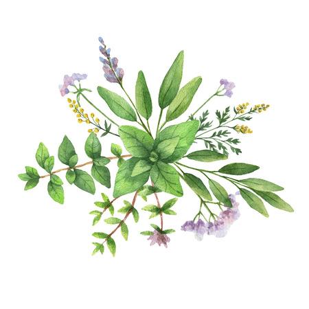 水彩の手描きの野生のハーブとスパイスの花束。