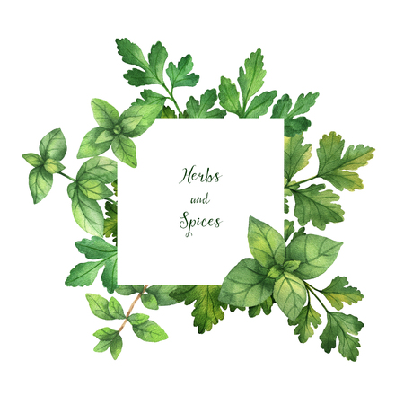 Watercolor hand painted square frame with wild herbs and spices. Reklamní fotografie