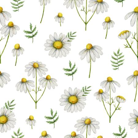 水彩カモミール花や葉は、白い背景で隔離のシームレスなパターン。 写真素材