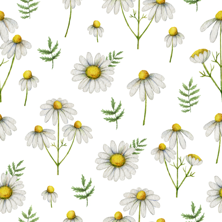Watercolor chamomile seamless pattern of flowers and leaves isolated on white background.