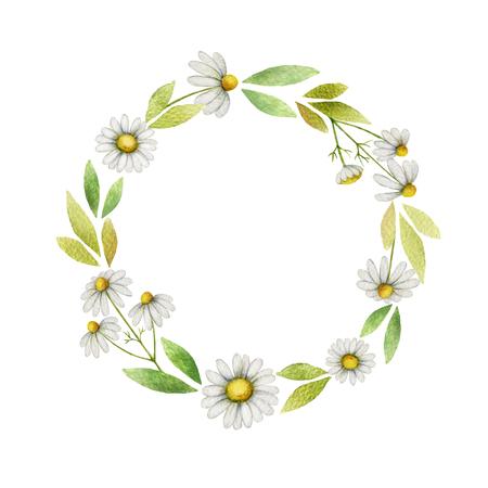 水彩のカモミールの花と白い背景の上の葉のフレームをラウンドします。