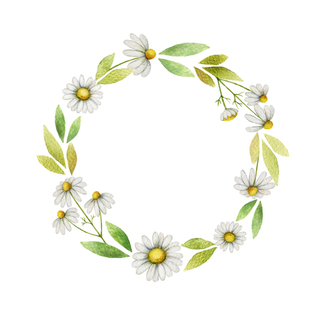 Watercolor chamomile round frame of flowers and leaves on a white background.