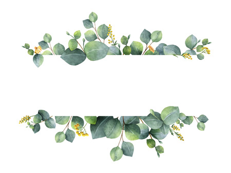 Watercolor green floral banner with silver dollar eucalyptus leaves and branches isolated on white background. Banque d'images