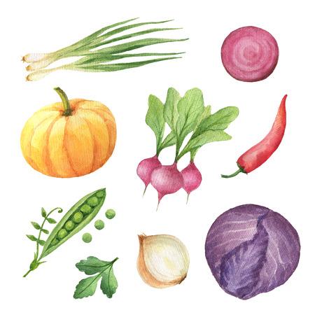 Waterverf ingesteld groenten en kruiden geïsoleerd op een witte achtergrond. Stockfoto