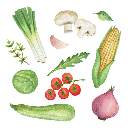 Watercolor set vegetables and herbs isolated on white background.