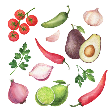 coriander: Watercolor traditional Mexican guacamole ingredients. Stock Photo