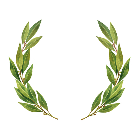 Watercolor Bay leaf wreath isolated on white background. 版權商用圖片