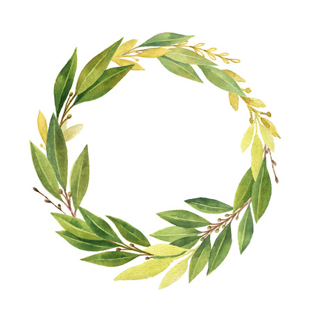 greenery: Watercolor Bay leaf wreath isolated on white background. Stock Photo