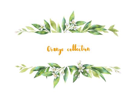 수채화 배너 과일 오렌지 분기 흰색 배경에 고립. 스톡 콘텐츠